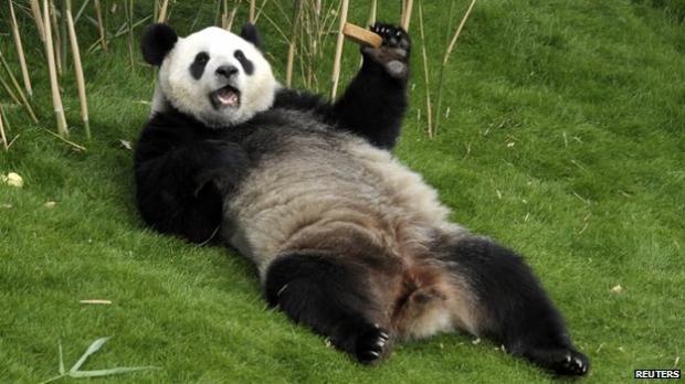 Dirty Panda Meme Generator Imgflip
