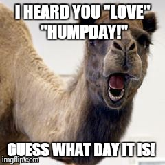 "Camel | I HEARD YOU ""LOVE"" ""HUMPDAY!"" GUESS WHAT DAY IT IS! 
