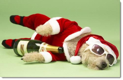 christmas drunk dog meme template