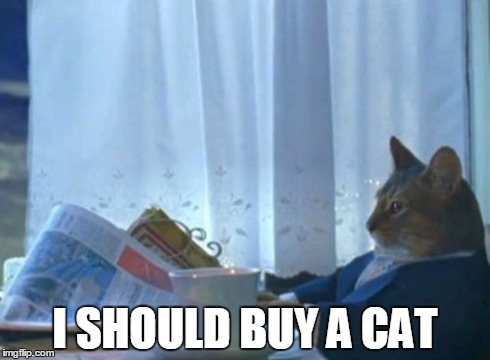 After spending a whole workday watching cat videos on Youtube | I SHOULD BUY A CAT | image tagged in memes,i should buy a boat cat | made w/ Imgflip meme maker