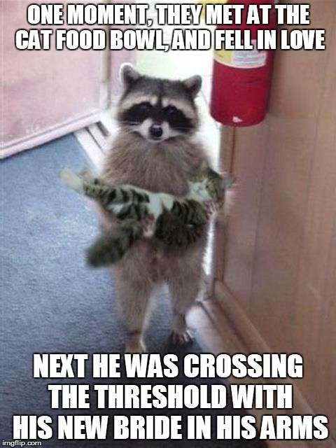 Cat Burglar Raccoon | ONE MOMENT, THEY MET AT THE CAT FOOD BOWL, AND FELL IN LOVE NEXT HE WAS CROSSING THE THRESHOLD WITH HIS NEW BRIDE IN HIS ARMS | image tagged in cat burglar raccoon | made w/ Imgflip meme maker