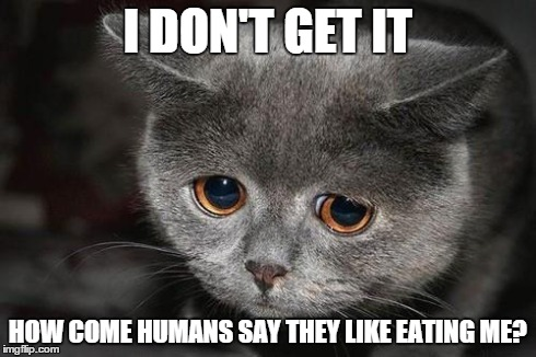 Funny Cat Meme Generator : Humans eat what?! imgflip