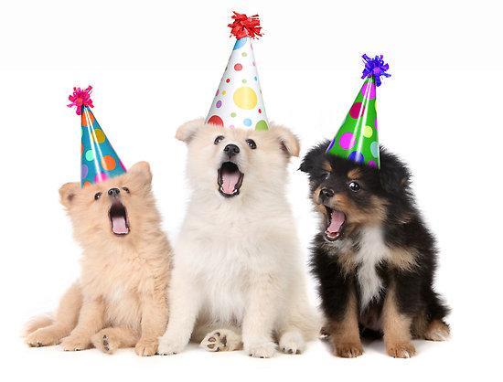 happy birthday puppy meme happy birthday puppies Blank Template   Imgflip happy birthday puppy meme