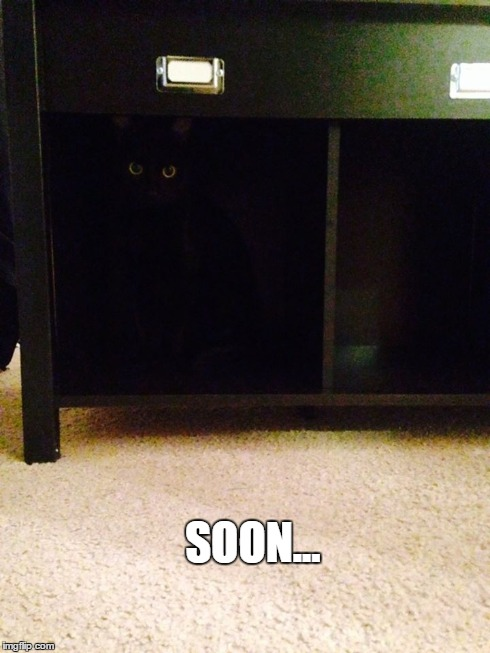Soon Cat | SOON... | image tagged in soon,evil cat | made w/ Imgflip meme maker