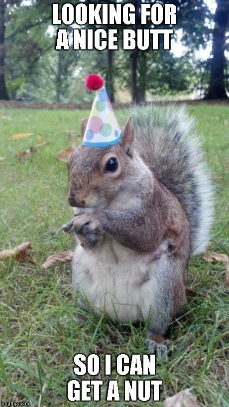 Super Birthday Squirrel | LOOKING FOR A NICE BUTT SO I CAN GET A NUT | image tagged in memes,super birthday squirrel | made w/ Imgflip meme maker