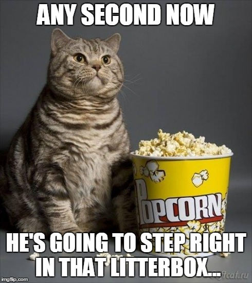 Catastrophe! | ANY SECOND NOW HE'S GOING TO STEP RIGHT IN THAT LITTERBOX... | image tagged in popcorn cat,funny,memes | made w/ Imgflip meme maker