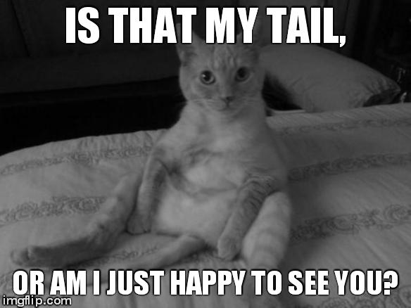 Chester The Cat | IS THAT MY TAIL, OR AM I JUST HAPPY TO SEE YOU? | image tagged in memes,chester the cat | made w/ Imgflip meme maker