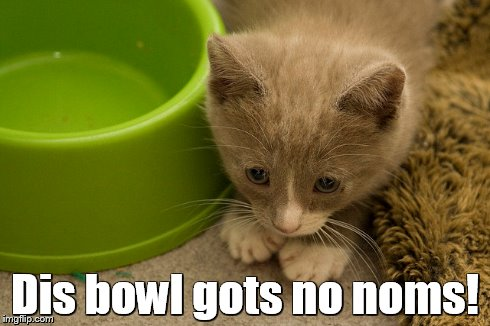 Dis bowl gots no noms! | image tagged in funny cat | made w/ Imgflip meme maker