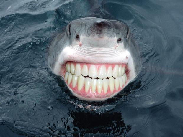 High Quality Sharkteeth Blank Meme Template