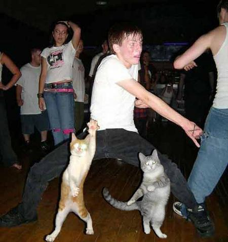 Cats Dancing Meme Template