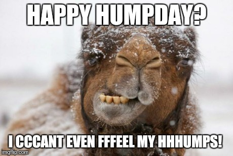 Freezing Hump Day Camel | HAPPY HUMPDAY? I CCCANT EVEN FFFEEL MY HHHUMPS! | image tagged in freezing hump day camel | made w/ Imgflip meme maker