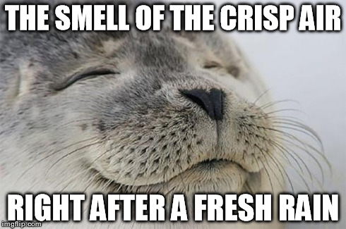 Reminds me that life isn't so bad after all.. | THE SMELL OF THE CRISP AIR RIGHT AFTER A FRESH RAIN | image tagged in memes,satisfied seal,rain,weather | made w/ Imgflip meme maker