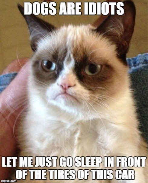 Grumpy Cat Meme | DOGS ARE IDIOTS LET ME JUST GO SLEEP IN FRONT OF THE TIRES OF THIS CAR | image tagged in memes,grumpy cat | made w/ Imgflip meme maker