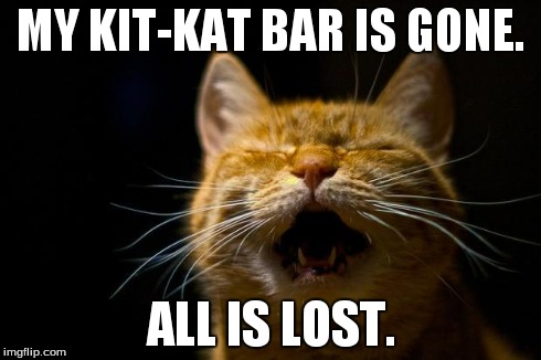 gmixr image tagged in all is lost,cats,memes imgflip