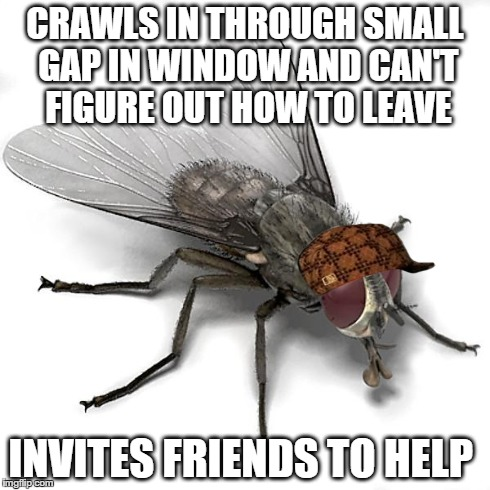 Scumbag House Fly | CRAWLS IN THROUGH SMALL GAP IN WINDOW AND CAN'T FIGURE OUT HOW TO LEAVE INVITES FRIENDS TO HELP | image tagged in scumbag house fly,scumbag | made w/ Imgflip meme maker