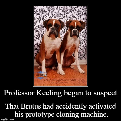 Accidents. | Professor Keeling began to suspect | That Brutus had accidently activated his prototype cloning machine. | image tagged in funny,demotivationals,boxer dog | made w/ Imgflip demotivational maker