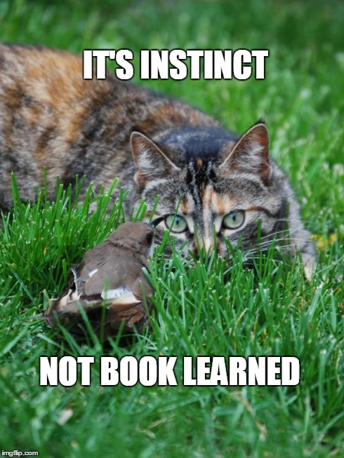 cat and bird | IT'S INSTINCT NOT BOOK LEARNED | image tagged in cat and bird | made w/ Imgflip meme maker