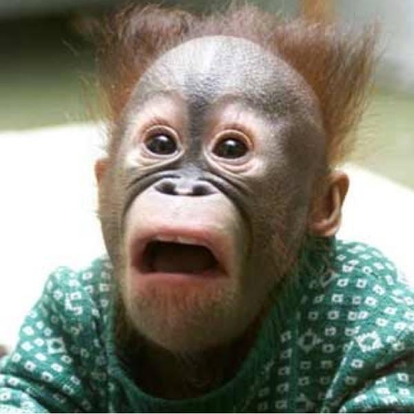 scared monkey blank template imgflip