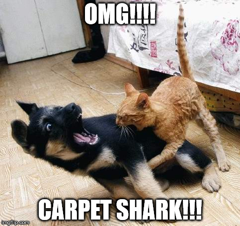 Carpet Shark | OMG!!!! CARPET SHARK!!! | image tagged in nom,cat,dog,carpet shark | made w/ Imgflip meme maker