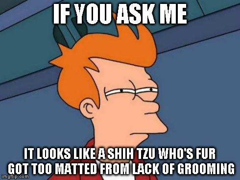 Futurama Fry Meme | IF YOU ASK ME IT LOOKS LIKE A SHIH TZU WHO'S FUR GOT TOO MATTED FROM LACK OF GROOMING | image tagged in memes,futurama fry | made w/ Imgflip meme maker