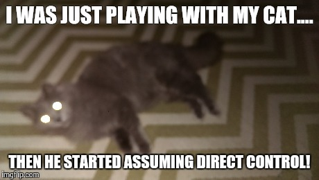 Harbinger Cat Ash | I WAS JUST PLAYING WITH MY CAT.... THEN HE STARTED ASSUMING DIRECT CONTROL! | image tagged in mass effect,harbinger,cat | made w/ Imgflip meme maker
