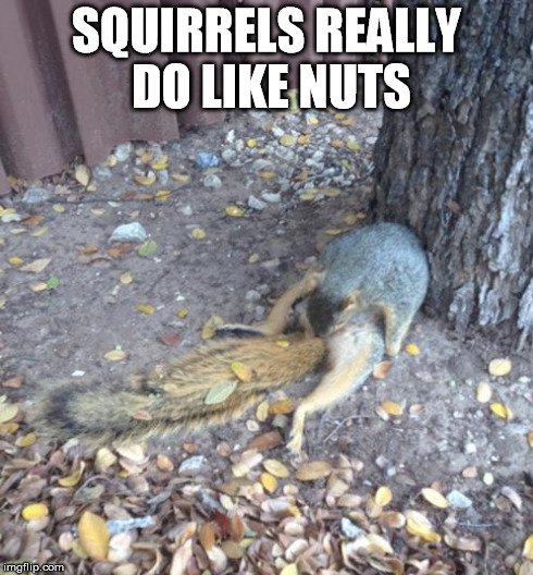 hk1zy hereforthememes's images imgflip,Squirrel Meme Nuts