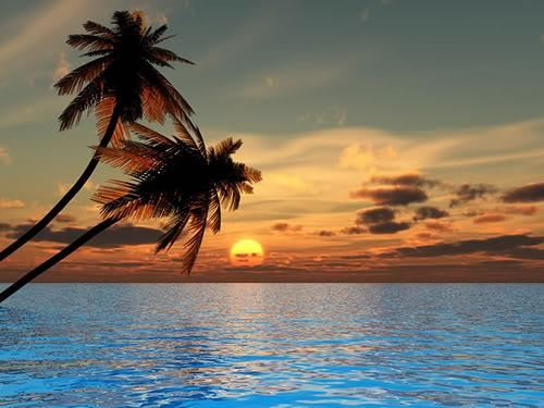 Palm Trees Sunset Blank Template Imgflip