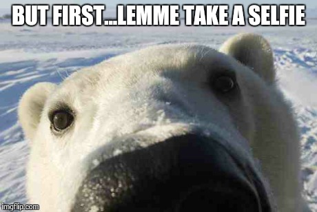 Polar Bear selfie | BUT FIRST...LEMME TAKE A SELFIE | image tagged in memes | made w/ Imgflip meme maker