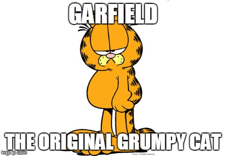 The Original Grumpy Cat Imgflip