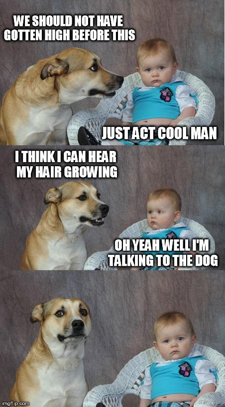 Bad joke dog | WE SHOULD NOT HAVE GOTTEN HIGH BEFORE THIS JUST ACT COOL MAN I THINK I CAN HEAR MY HAIR GROWING OH YEAH WELL I'M TALKING TO THE DOG | image tagged in bad joke dog | made w/ Imgflip meme maker