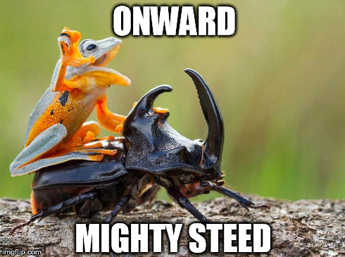 Onward, Mighty Steed! | ONWARD MIGHTY STEED | image tagged in frog,beetle,battle,funny,meme | made w/ Imgflip meme maker