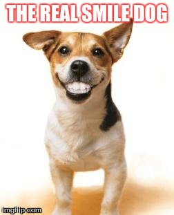 Dog smiling meme - photo#20