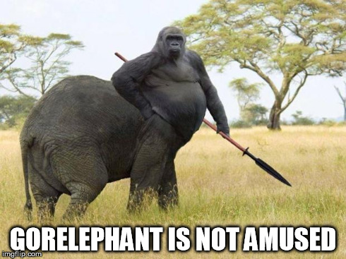 da fuq? | GORELEPHANT IS NOT AMUSED | image tagged in da fuq | made w/ Imgflip meme maker