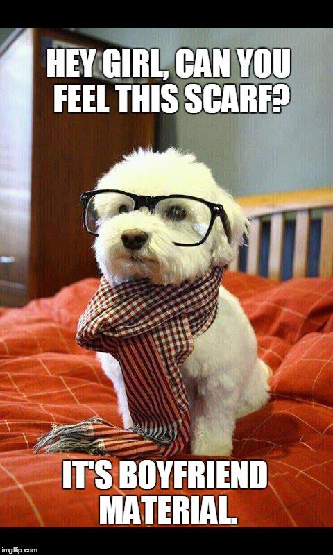 hyiuf intelligent dog meme imgflip