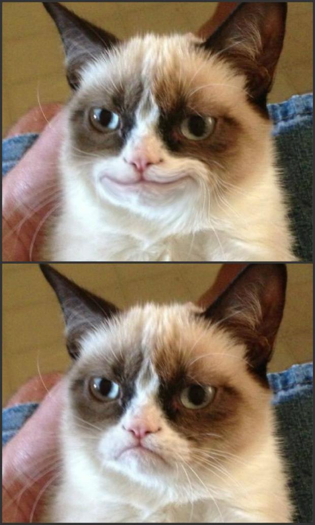 Happy Grumpy cat photoshop Blank Template - Imgflip