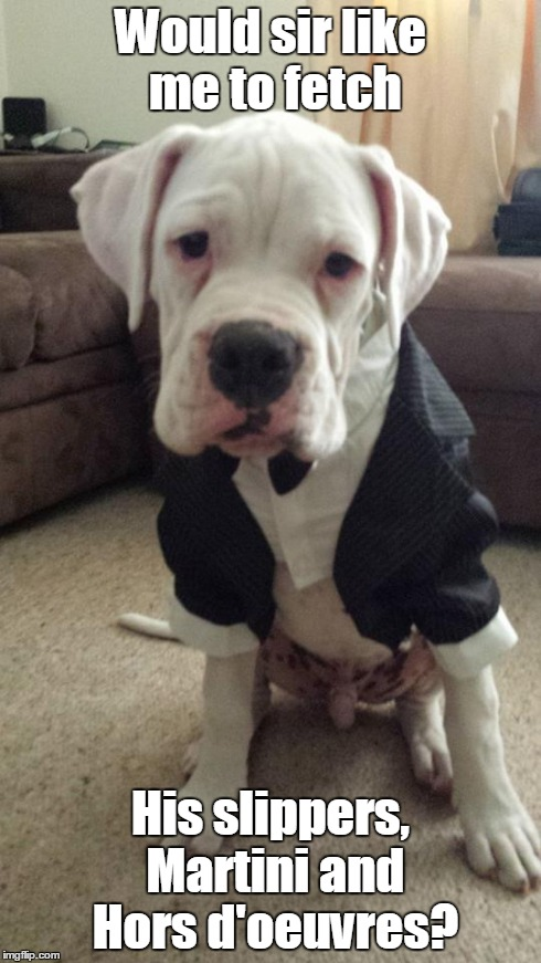 Butler | Would sir like me to fetch His slippers, Martini and Hors d'oeuvres? | image tagged in dogs,funny,butler,memes | made w/ Imgflip meme maker