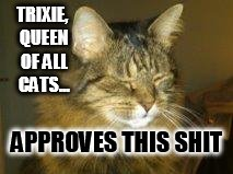 TRIXIE, QUEEN OF ALL CATS... APPROVES THIS SHIT | image tagged in trixie | made w/ Imgflip meme maker