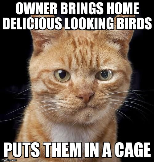 OWNER BRINGS HOME DELICIOUS LOOKING BIRDS PUTS THEM IN A CAGE | image tagged in mckayla meowroney,AdviceAnimals | made w/ Imgflip meme maker