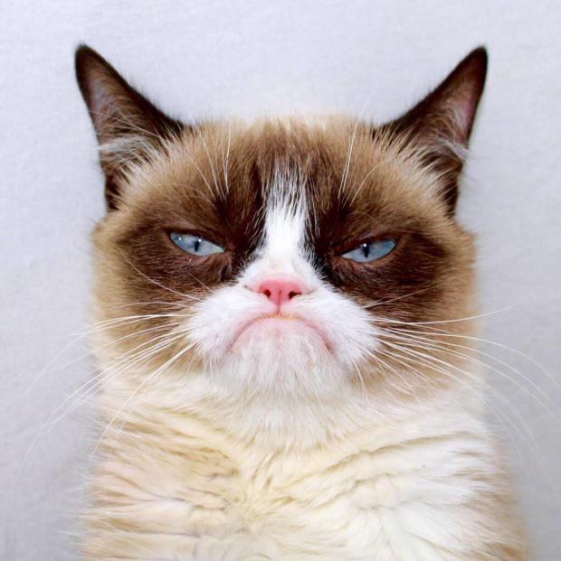 Grumpy Cat Outside Blank Template - Imgflip