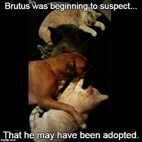 Adopted | Brutus was beginning to suspect... That he may have been adopted. | image tagged in dogs,funny,memes,cats,boxers | made w/ Imgflip meme maker