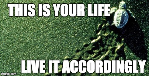 Turtle | THIS IS YOUR LIFE LIVE IT ACCORDINGLY | image tagged in turtle,your life | made w/ Imgflip meme maker