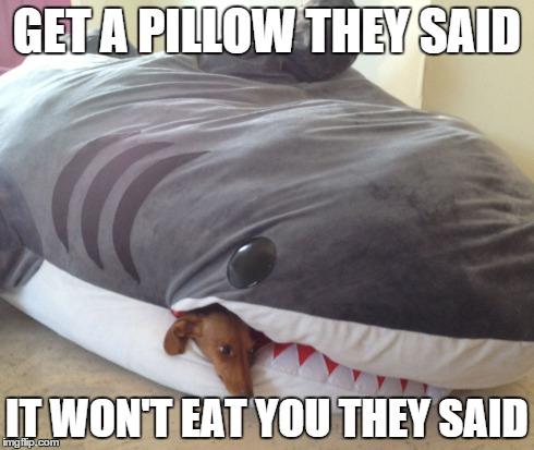 Pillow eating dog | GET A PILLOW THEY SAID IT WON'T EAT YOU THEY SAID | image tagged in pillow | made w/ Imgflip meme maker