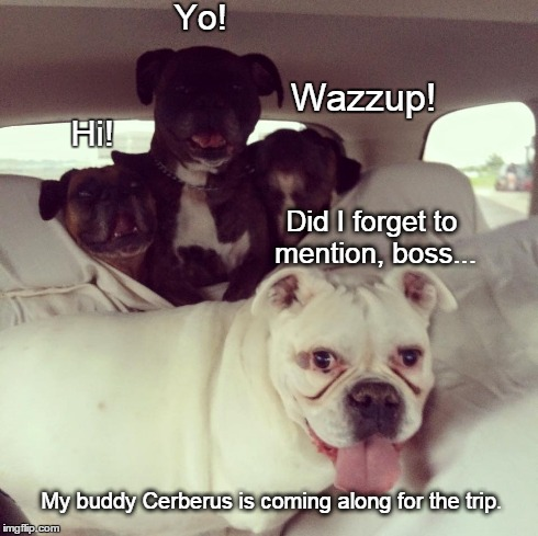 Gates of Hades | Did I forget to mention, boss... My buddy Cerberus is coming along for the trip. Hi! Yo! Wazzup! | image tagged in dogs,funny,memes,boxers | made w/ Imgflip meme maker
