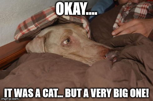 Scary | OKAY.... IT WAS A CAT... BUT A VERY BIG ONE! | image tagged in scary,fear,dogs,weimaraner | made w/ Imgflip meme maker