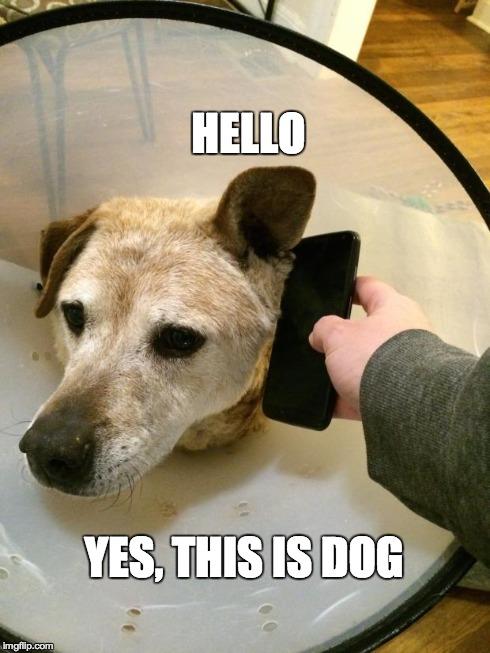 yes dog meme - photo #12