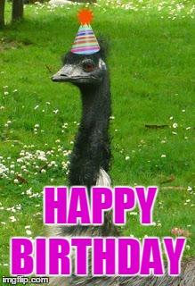 emu | HAPPY BIRTHDAY | image tagged in emu | made w/ Imgflip meme maker