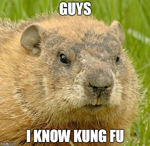 Chuck the WoodChuck | GUYS I KNOW KUNG FU | image tagged in woodchuckpun,kung fu,chuck,funny,memes,funny memes | made w/ Imgflip meme maker