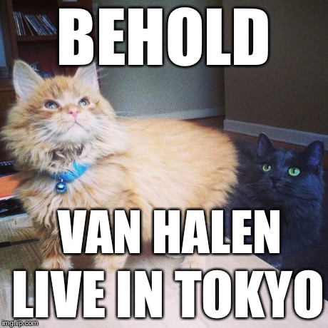 Rod Lee | BEHOLD LIVE IN TOKYO VAN HALEN | image tagged in cats | made w/ Imgflip meme maker