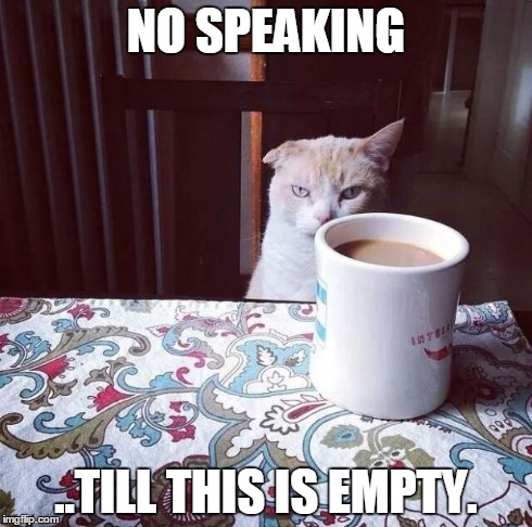 Cat Doesn't Like this Coffee | NO SPEAKING ..TILL THIS IS EMPTY. | image tagged in cat doesn't like this coffee,cats,coffee | made w/ Imgflip meme maker