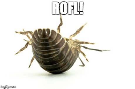ROFL | ROFL! | image tagged in rofl,pill bug,crustacean,arthropod,not insect | made w/ Imgflip meme maker